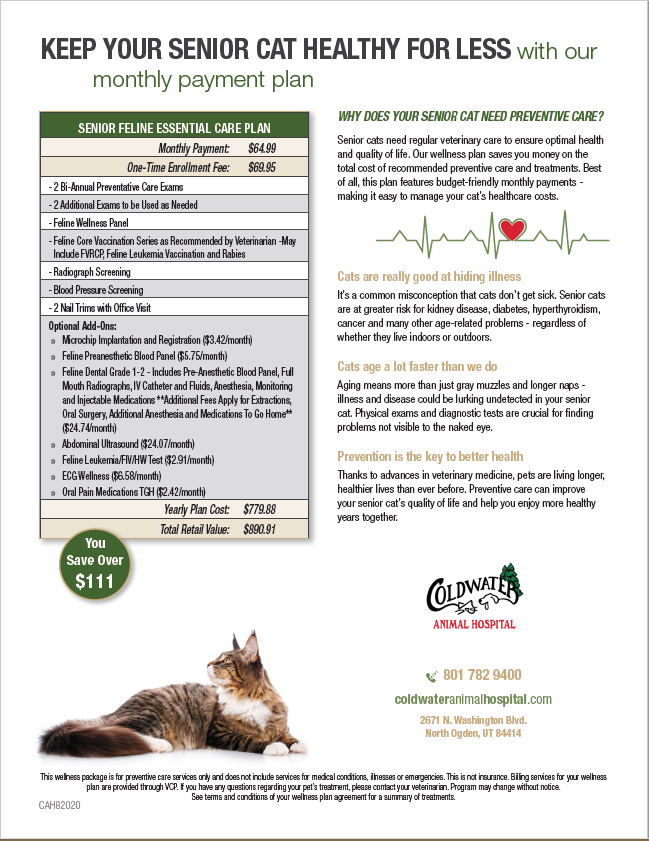 Senior Cat Wellness Plan