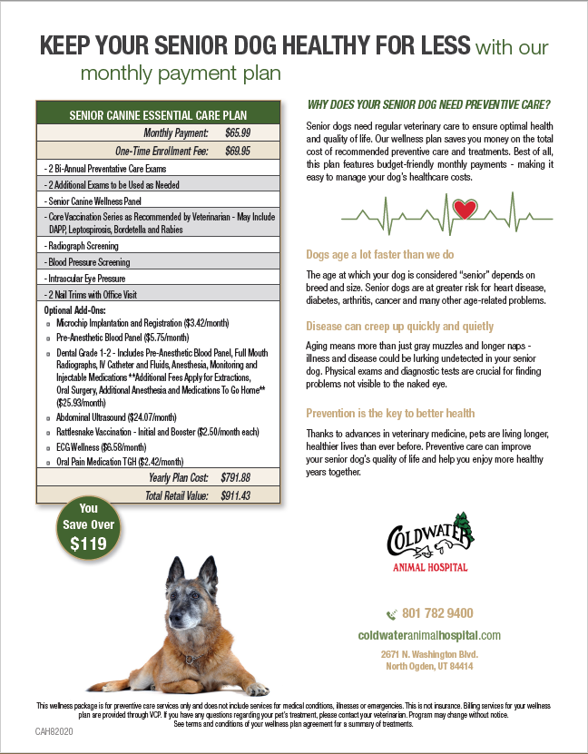 Senior Dog Wellness Plan